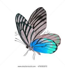 Blue And Green Butterfly - butterfly big blue wings on white stock vector 392496562
