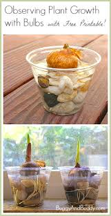 science for kids observing plant growth using bulbs