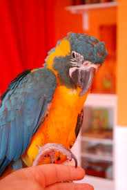 barbara u0027s force free animal training talk help my parrot wont