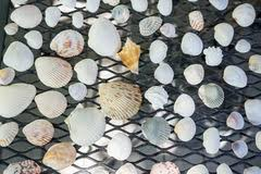 Assorted Seashells Assorted Seashells Stock Photos Sign Up For Free