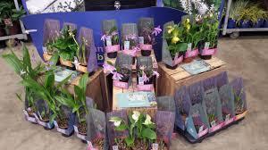 Different Types Of Gardens Garden Orchids From Bransford Webbs News Planteria