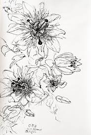 christian peltenburg brechneff passion fruit flower drawings