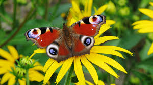 images of butterflies hd