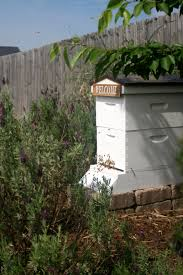 landscaping a small urban apiary peregrin farms