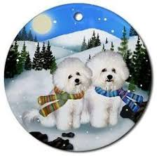 bichon frise christmas holiday cards are 8 1 2