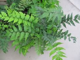 Indoor Tropical Plants For Sale - shade plants for inside indoor tropical plants for shade