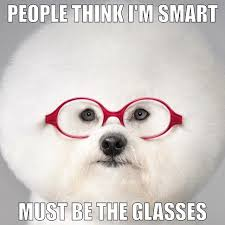 Dog With Glasses Meme - 43 best funny dog memes images on pinterest fluffy pets funny