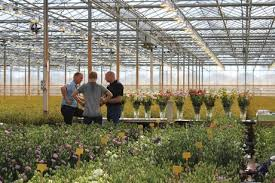 nl lisianthus open day at sakata ornamentals