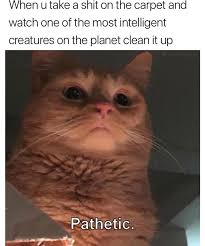 Clean Animal Memes - morning animal memes of the day 5 justviral co