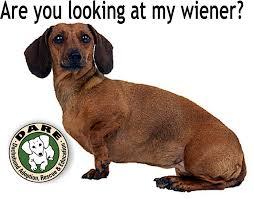 Weiner Dog Meme - funny weiner dog photos funny pics story