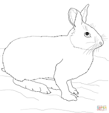 snowshoe hare or rabbit coloring page free printable coloring pages