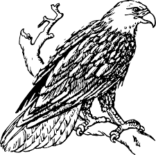 eagle vector art free download clip art free clip art on