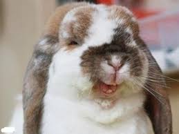 Funny Bunny Memes - i guess you could say thats a funny bunny meme guy