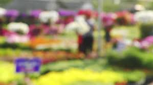 natural flowers garden spring bokeh blurred background stock