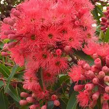 native plant nursery melbourne din san nursery home facebook