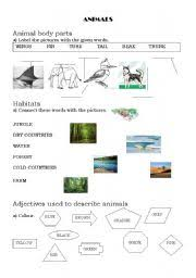 english teaching worksheets the animals