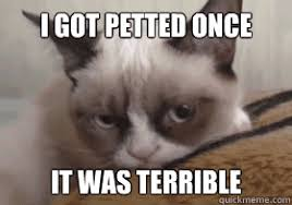 Crazy Cat Memes - i was petted once it was terrible grumpy cat action link grumpy