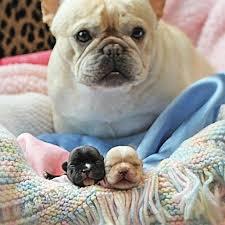 Tiny Tiny Best 25 Tiny Puppies Ideas On Pinterest Small Puppies Teacup