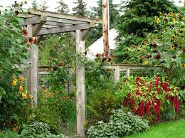 beautiful vegetable garden photos decorating clear