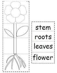 have students cut and paste to create a plant flip book students