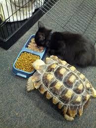 Tortoise Meme - do you like this meme posted on http www tumblr com follow