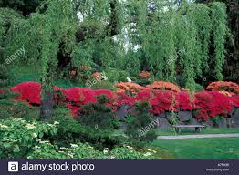 Washington State Botanical Gardens Usa Washington State Seattle Japanese Gardens Trees With Stock
