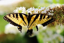 flora sky apk free free images moths and butterflies insect fauna flora sky