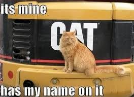 Mine Meme - 50 cat memes grab bag edition cattime