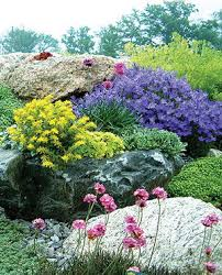Rock Garden Plant How To Grow And Use Rock In Your Garden