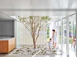house design inside the house a glamorous tree growing inside the house explained by the architect