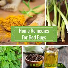 natural bed bug remedies home remedies to get rid of bed bug try and experience