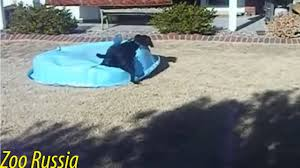 dog runs away with inflatable pool youtube
