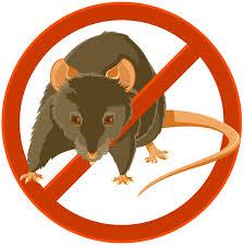 rat eradication baltimore city department of public works