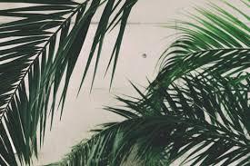 where to buy palms for palm sunday palm sunday palms mullica hill