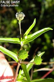 florida native plants florida native plant what florida native plant is blooming today