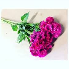 coxcomb flower maciel s flowers 15 photos florists 523 n rice ave oxnard