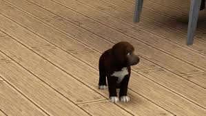 sims 3 boxer dog puppies born with