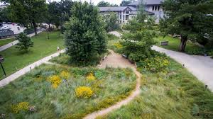native plants of kansas the meadow