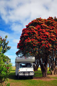 93 best pohutukawa new zealand u0027s christmas tree images on