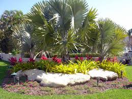 florida landscapes images Florida beach house landscaping ideas jbeedesigns outdoor palm jpg