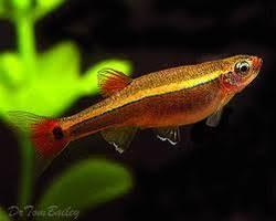aquarium fish in ernakulam kerala manufacturers suppliers