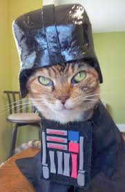 Funny Halloween Animal Costumes 22 Cats Halloween Costumes Images Animal