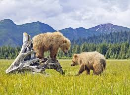15 top rated tourist attractions in alaska planetware