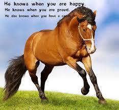 horse saying love horses heart horses pinterest horse