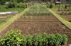 Benefits Of Urban Gardening - urban farming offers green benefits going green the earth times