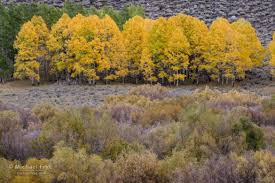 fall color eastern sierra michael frye photography