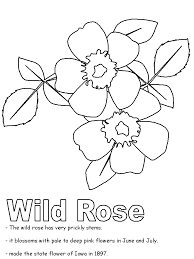 wild rose coloring