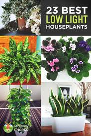23 low light houseplants that are easy to maintain and nearly