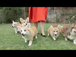 Queen Elizabeth Dogs The Loyal Royals The Queen U0027s Corgis Youtube