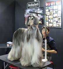 afghan hound puppies youtube domino afghan afghan hounds pinterest afghans afghan